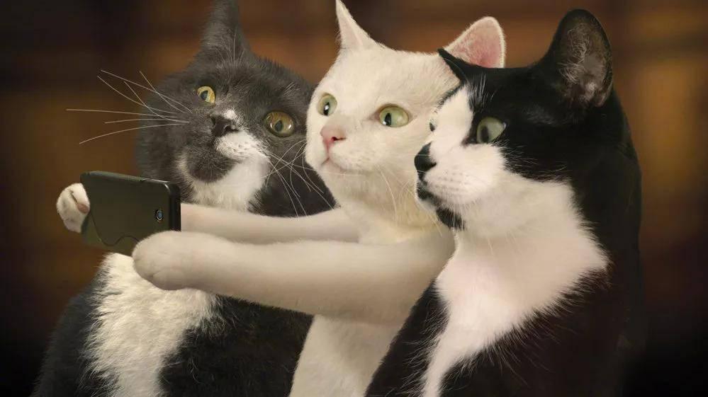 猫咪异食癖的症状及防治_猫咪得了异食癖如何治疗_猫咪异食癖的症状