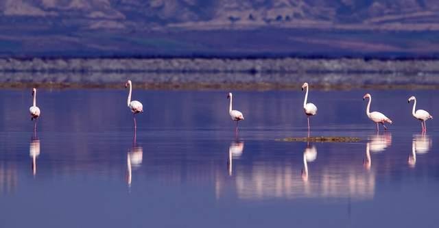 运城盐湖:中国古代科技史上的活化石,野生火烈鸟因何栖息至此?  第2张