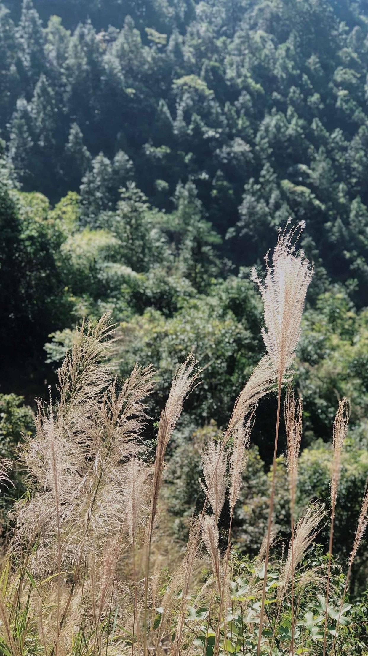 北方有呼伦贝尔大草原,粤西有鸡笼顶高山草甸,你想去玩吗?