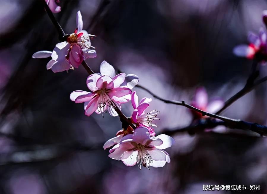 春暖花开八里沟,碧水奇峡等你来