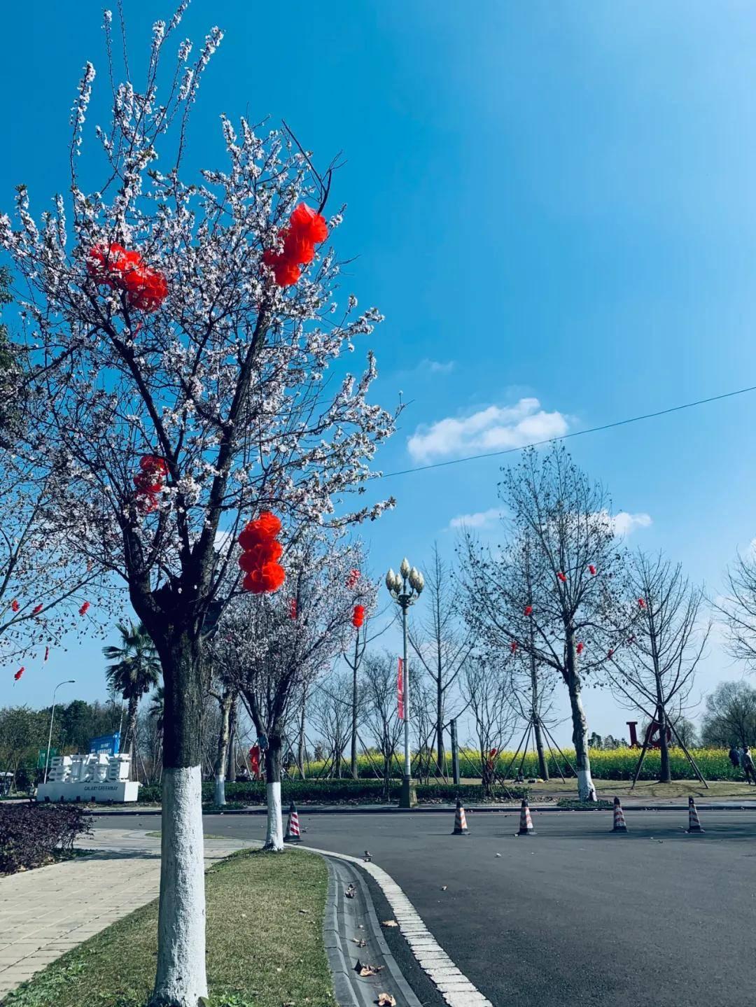 晒太阳、赏花花,带娃去抓住春日好时光吧