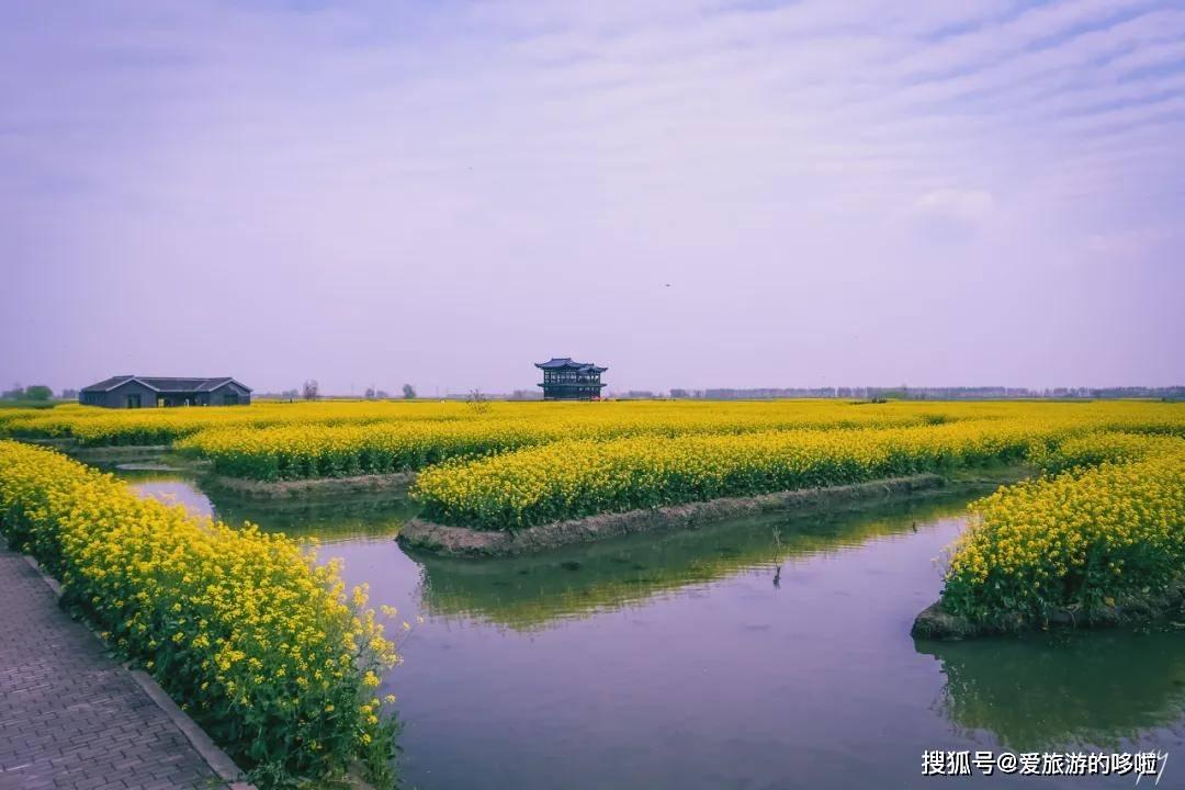 中国最美的油菜花全在这里了,我去过3个,你呢?