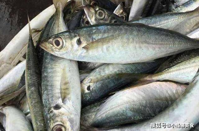 买鱼时,多买这三种鱼,都是野生的,金宝搏体育,味道比养