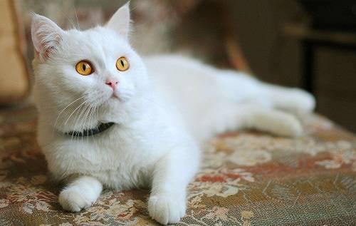 猫感冒会导致口臭吗