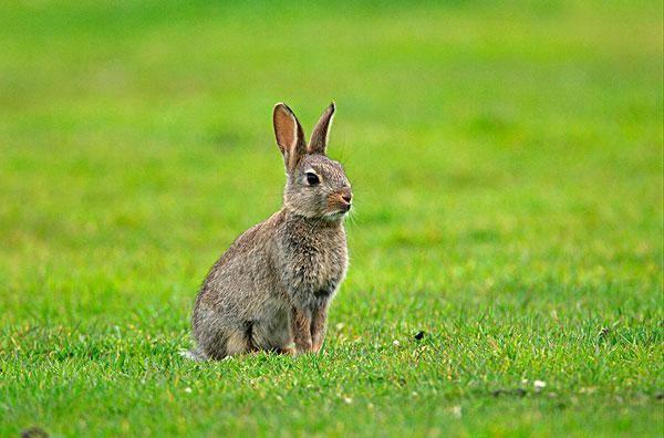 生肖兔:哪个时间出生命最好?