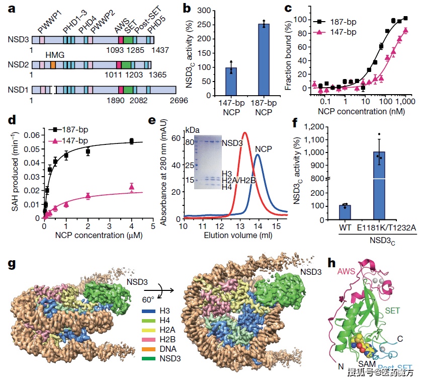 两篇Nature抗癌新突破:表观遗传新靶点――NSD3