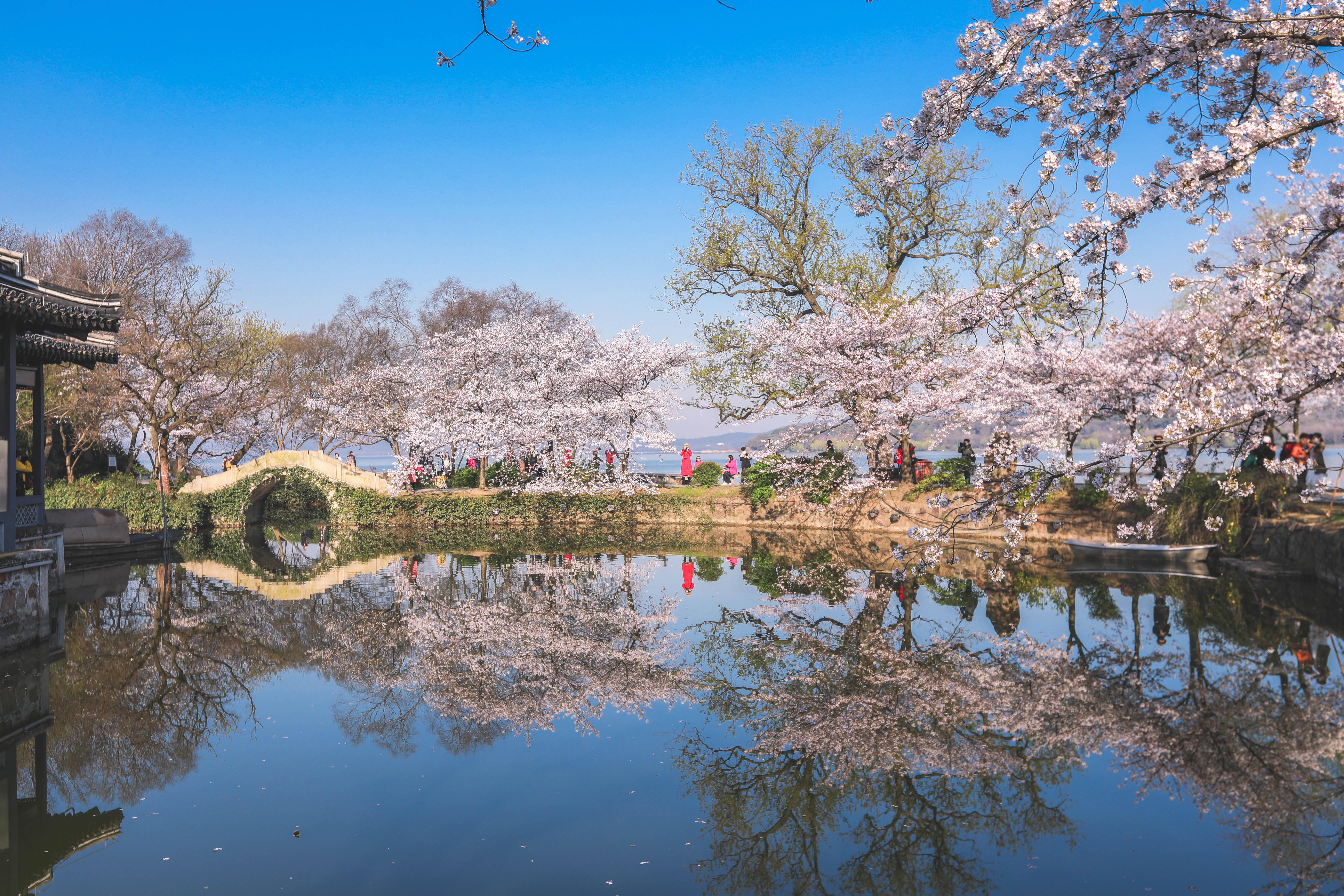 """原创             3月来无锡鼋头渚,是""""世界三大赏樱胜地""""之一,进入了盛花期"""