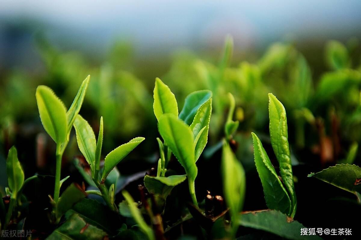 顶级绿茶穿进年代文 绿茶美人在七零