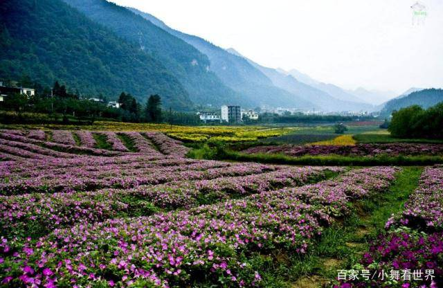 重庆这两个市辖区,经济水平都较高,名字却容易被游客读错