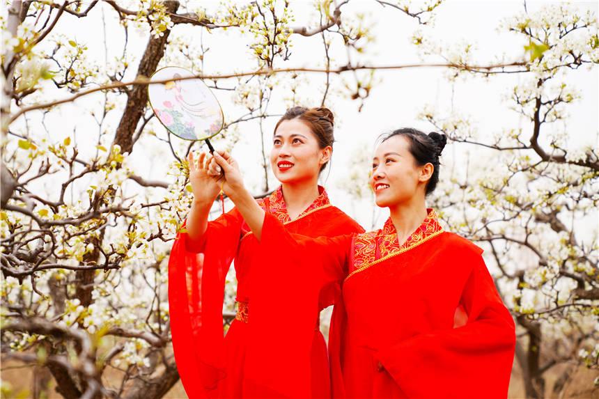 河北赏花好去处,邢台小城万亩梨花盛放,无数美女穿着汉服来打卡