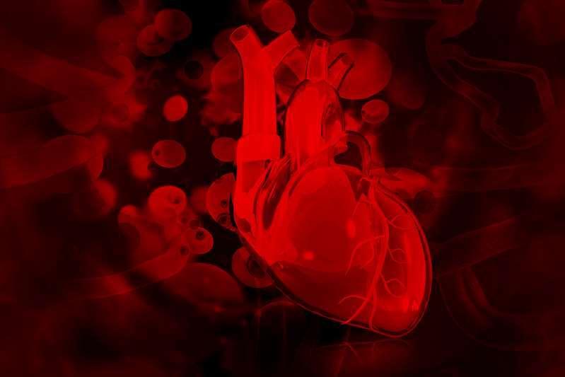 《循环》杂志:长距离游泳或太空生活等失重状态可让心脏缩小