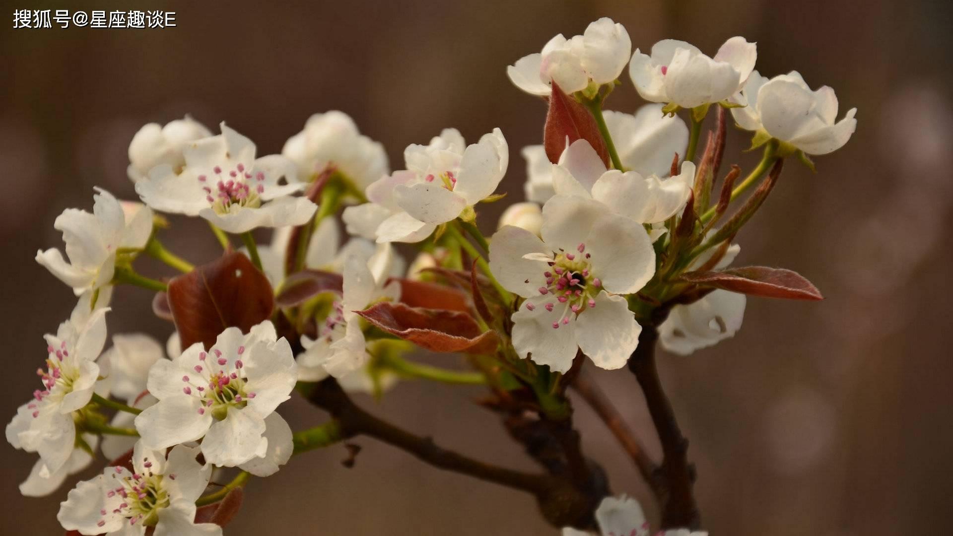 4月4日爱情运势:琴瑟和鸣,永结同心的四大星座  第3张
