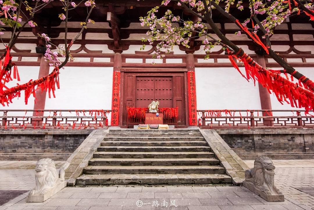 西安青龙寺樱花美如画,游客说好像日本京都,其实这里才是原版
