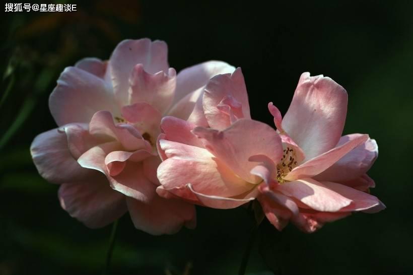 4月7日爱情运势:月老独宠,笑颜如花的四大星座  第2张