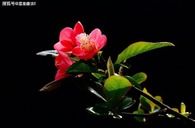 4月7日爱情运势:月老独宠,笑颜如花的四大星座  第3张