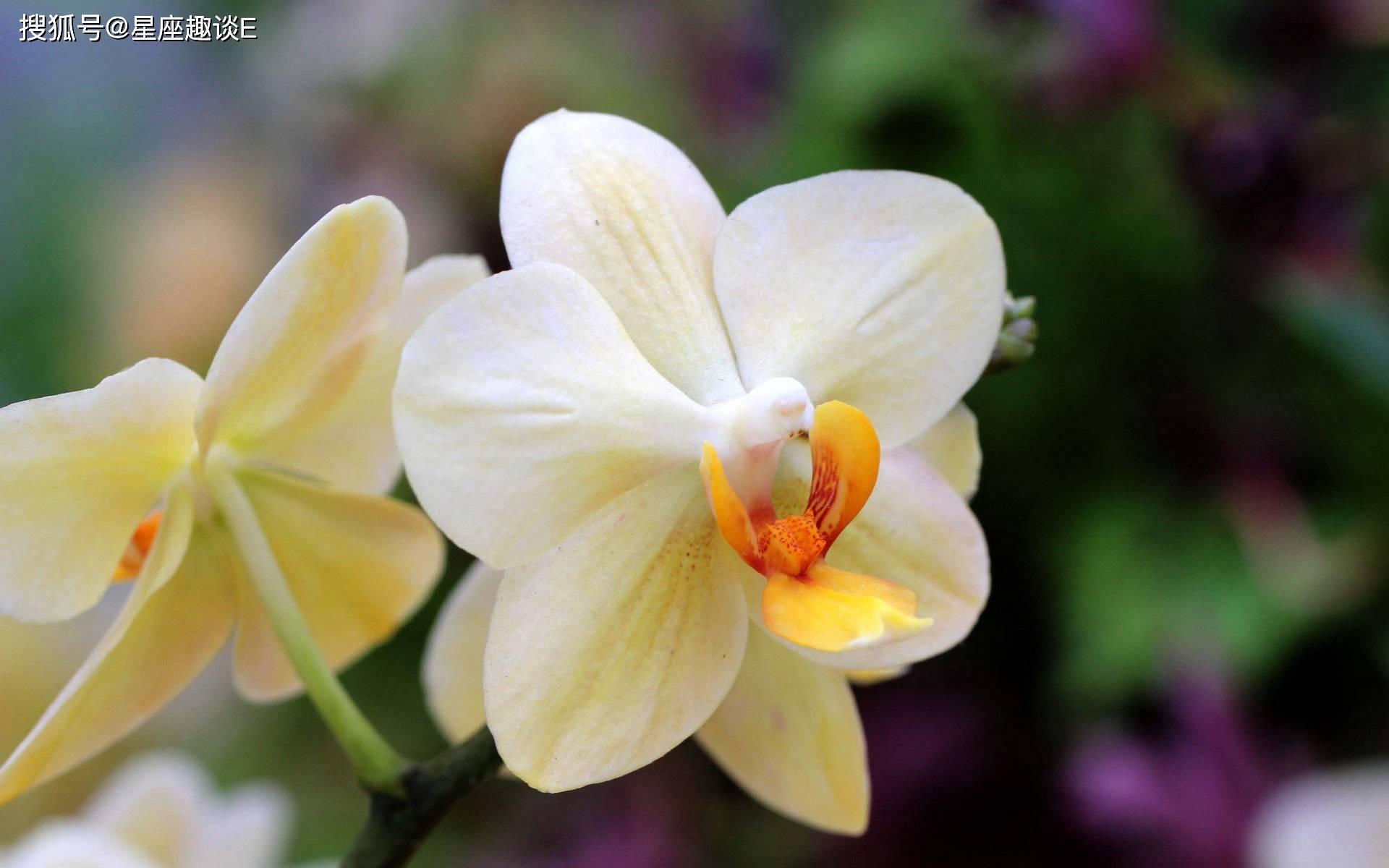 4月8日爱情运势:为爱倾心,携手幸福的四大星座  第3张