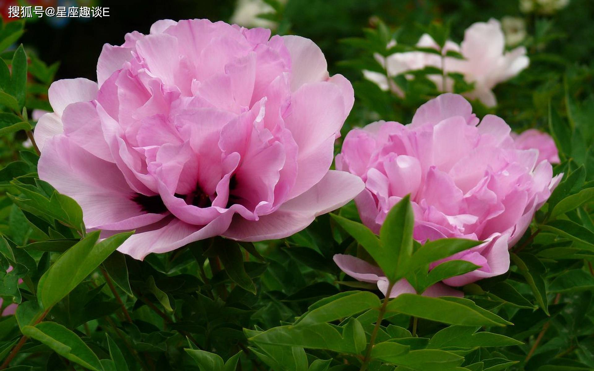 在4月中旬,桃花绽放,真爱涌现,佳人成双的三大星座  第1张