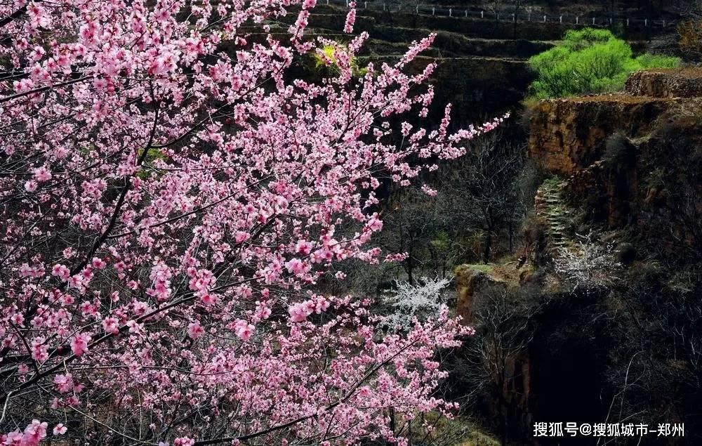 """春回百花争妍,喜迎游客高峰,太行大峡谷""""清明""""小长假完美收官!"""