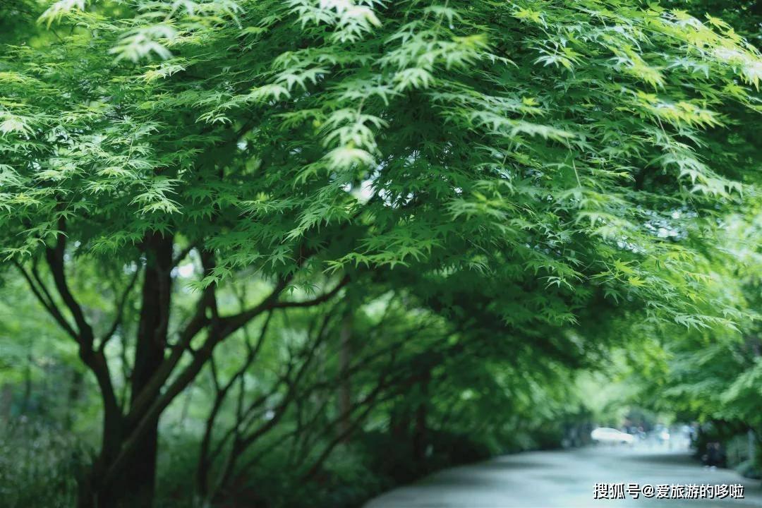 杭州终极拜佛攻略|走这条路,一天解锁灵隐法喜7大宝藏寺庙!