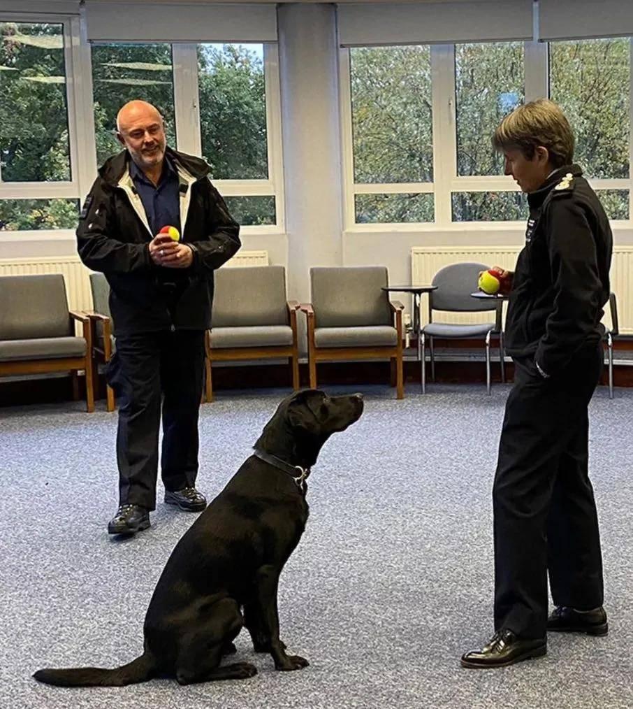 缉毒犬被警队开除,网友知道原因后笑喷了!