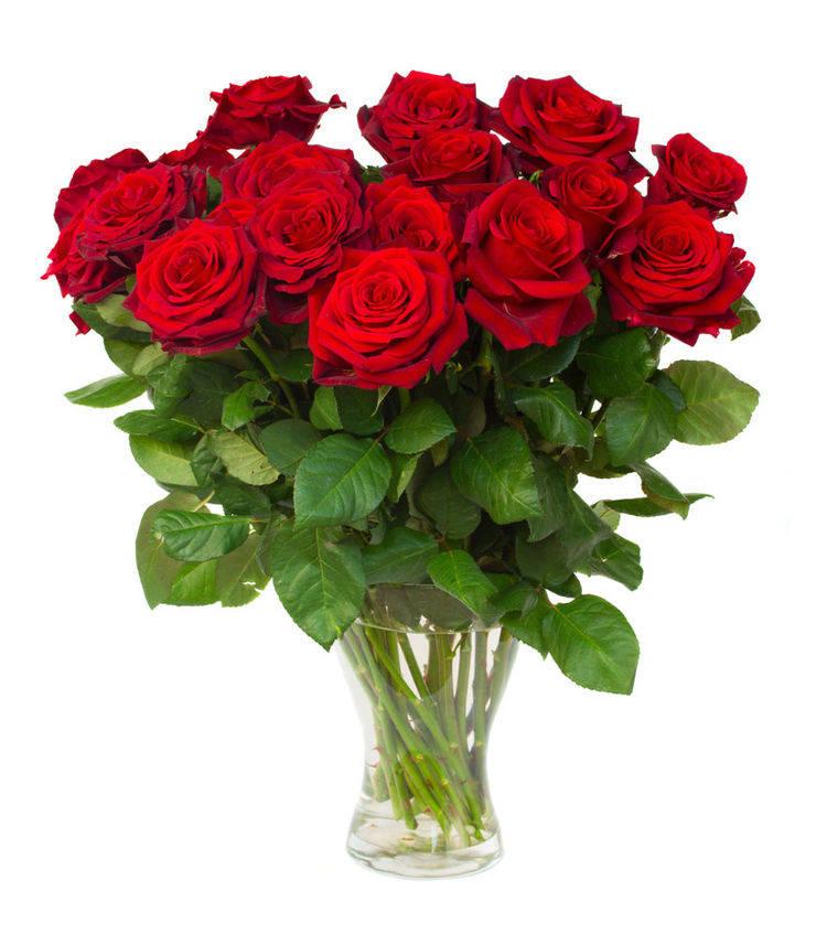 心理测试:选出你最喜欢的玫瑰,测你是越长越漂亮还是越长越丑?  第4张