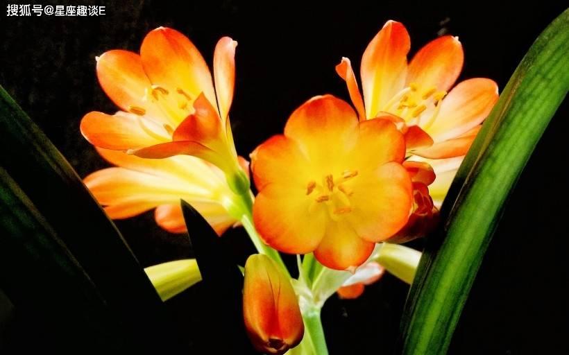 4月29日爱情运势:笃定情缘,喜出望外的四大星座  第1张