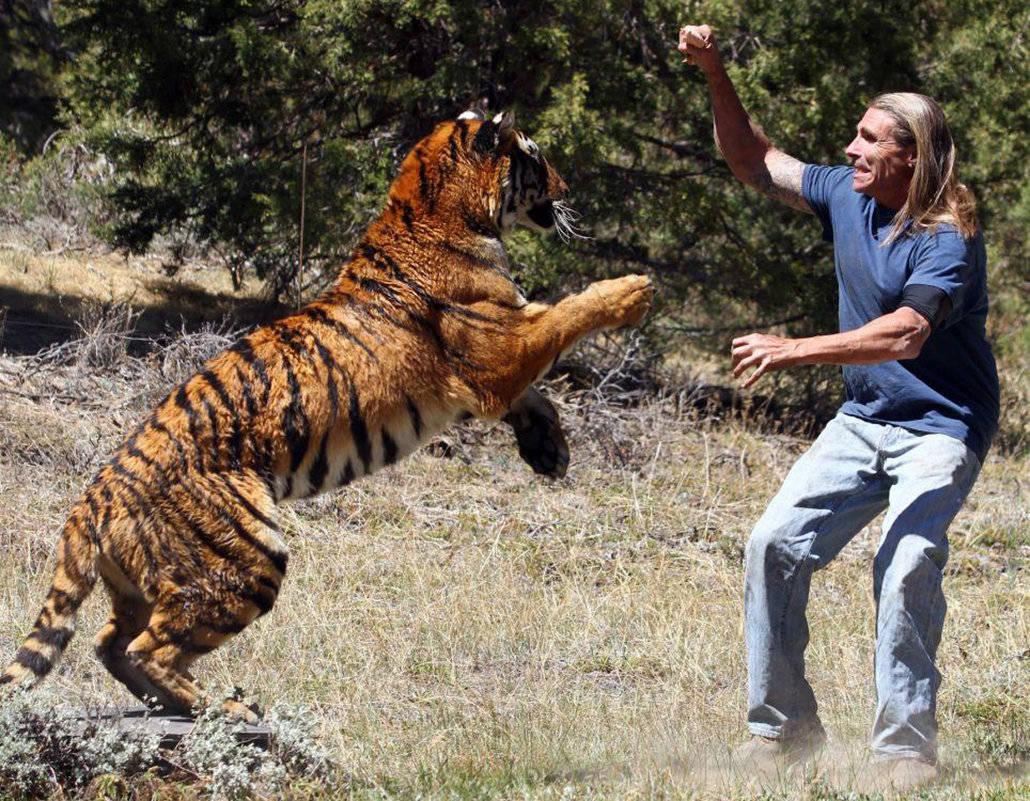 孕妇梦见老虎攻击自己 孕妇梦到老虎追咬自己