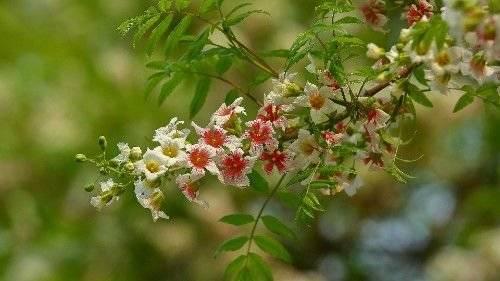 近段时间内,月老提携,缘分桃花桃花遍地开,收获爱情的3大生肖