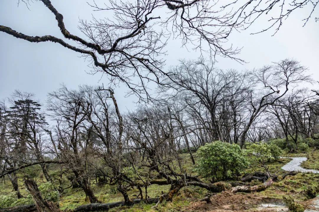 成都周边游好去处,自驾4h抵达贡嘎新秘境,蜀山伊甸园值得打卡!
