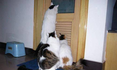 怪癖|好尴尬!我家猫又来偷窥自己上厕所了