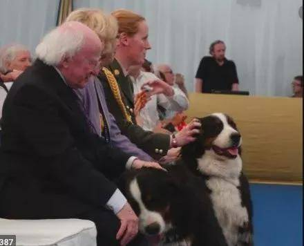 爱尔兰总统一本正经接受采访,他养的伯恩山犬抢走镜头