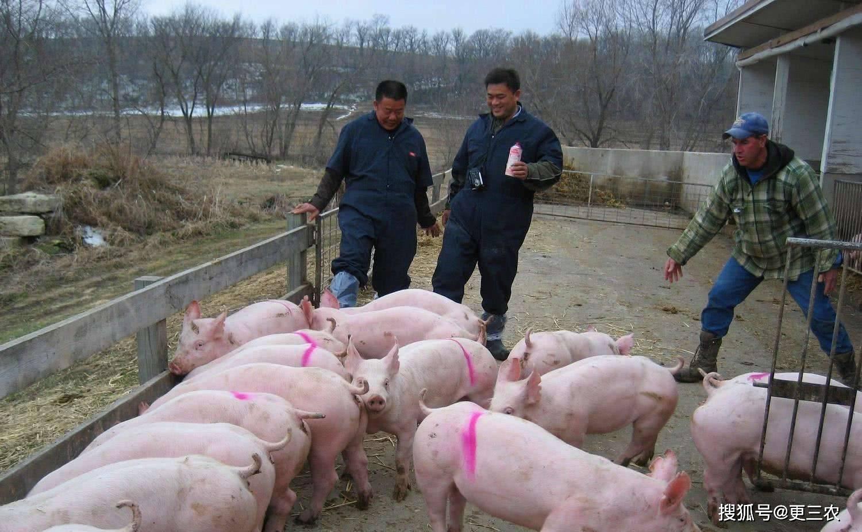 进口猪肉价格(鱼价格表)