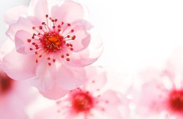 心理测试:你觉得哪朵花快要凋谢了?测你在别人眼中是傻还是精明  第2张