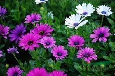 励志心语:只有努力了,才能绽放出成功的花朵