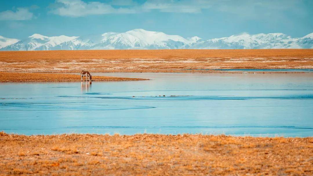 可可西里:西藏、青海、新疆最神秘的交汇之地!
