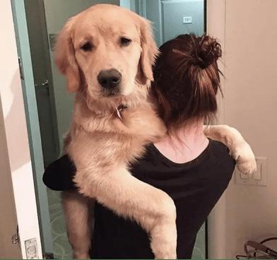 空調推薦:新風空調在手,懷孕照樣養狗