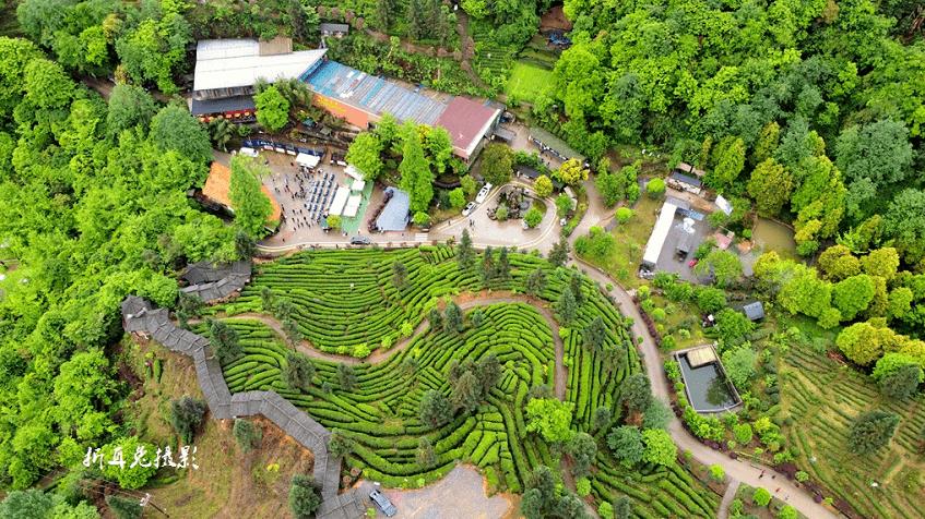 都江堰:发展特色农业项目,助力乡村振兴