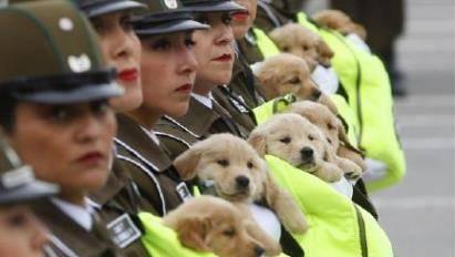 出席阅兵式的小奶狗们, 个个奶凶奶凶的, 心都被萌化了