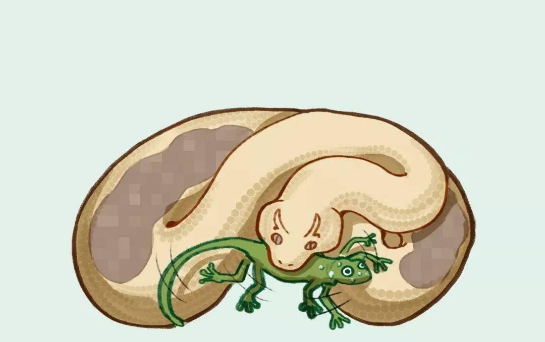 遭遇蟒蛇被蛇吞时,一把锋利的匕首能自救?高压气瓶匕首一刀干死
