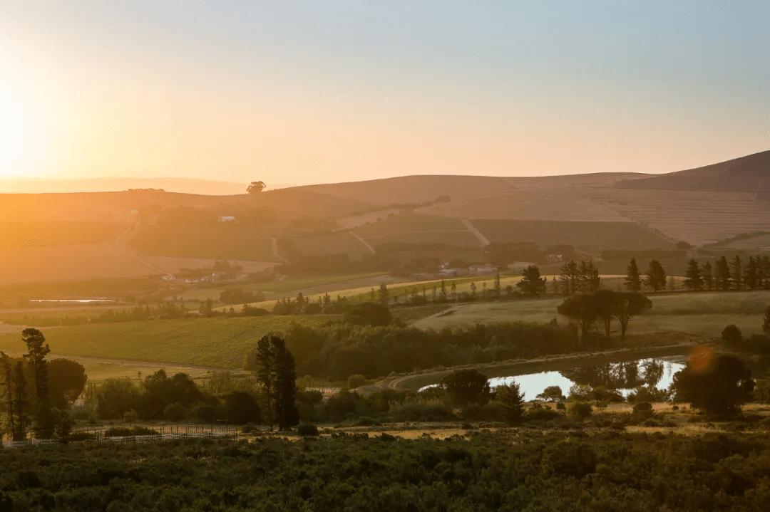 玛玲珑Mullineux:帕克近年来评分zui高的南非名庄 | 富隆酒业