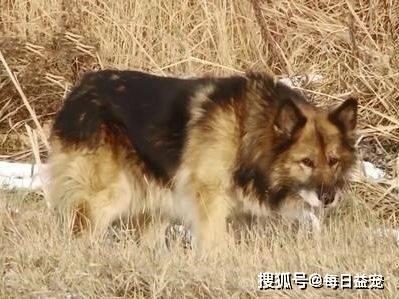 男子带狗狗出门散步,不幸遭遇车祸身亡,狗狗守在原地11年
