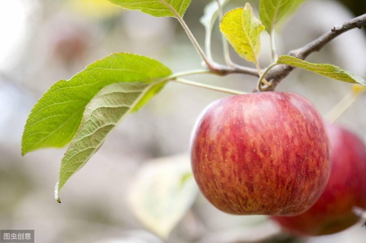 心理测试:哪份苹果最爽脆,测出你往后的人生路上是否平平安安0f6
