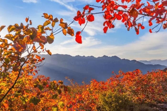 最美的秋天已经缓缓向你走来