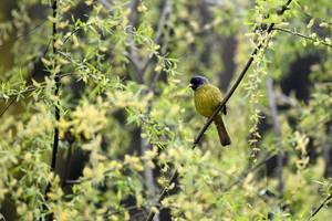 貴州遵義:初春時節 鳥兒枝頭嬉戲覓食