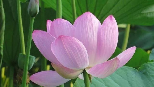 """天生""""美人胚子""""的三生肖,年轻时貌美如花,50岁依旧漂亮迷人"""