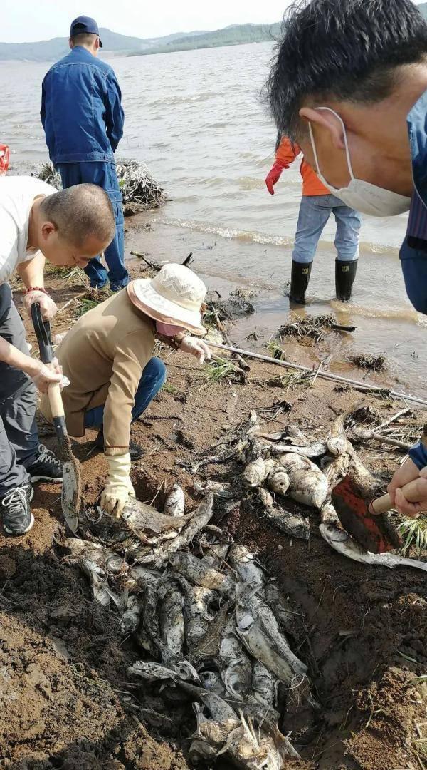 宾县二龙湖水源地惊现大量死鱼!排除水污染,