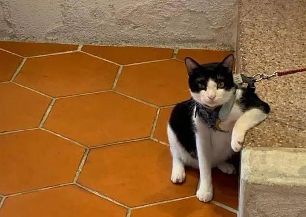 现在的猫,咋跩得跟村口二大爷似的?