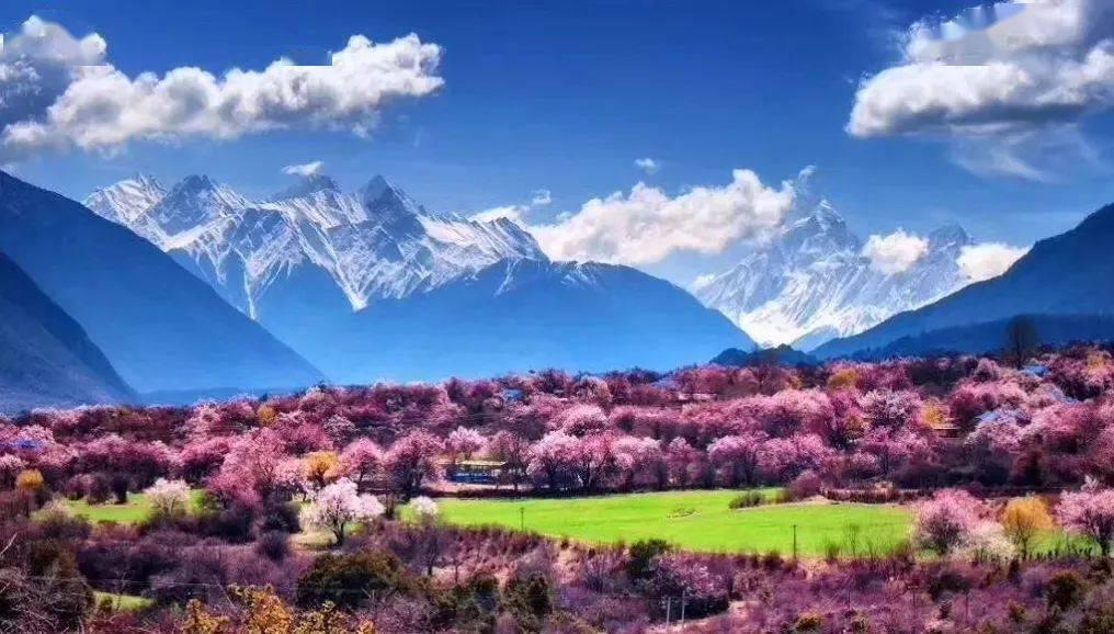 人间三月芳菲尽,藏地桃花始盛开