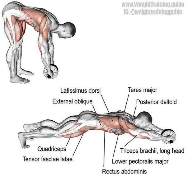 最全的肌肉训练动作图解,简单易懂,男女通用!