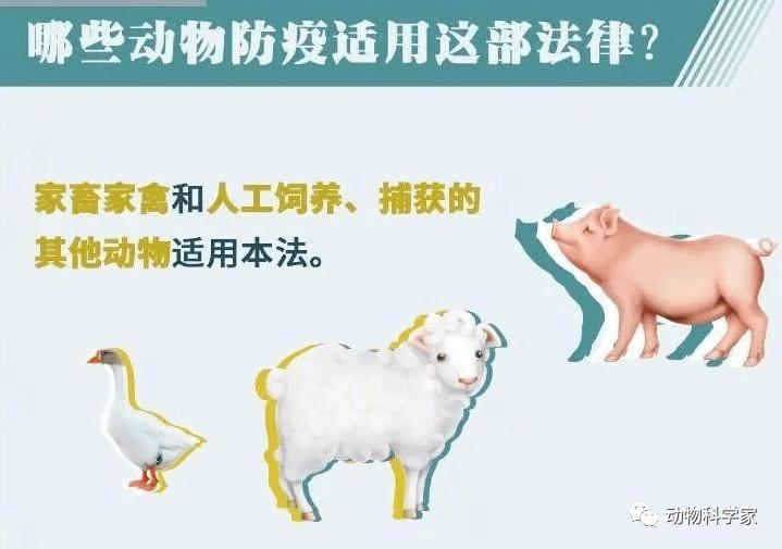买卖人口宰杀_宰杀前注水每头猪增 肉 50斤
